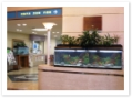 井野口病院のロビーに大型水槽1800型、奥に1200型にせせらぎ室内ビオトープを設置しました。