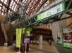 鳥取を象徴する二十世紀梨の展示館「なしっこ館」 室内にカシの木が植栽されていたが、成長が今一つ良くない!