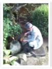 蹲で清め! このお茶庭、蹲は、約40年前に私が作庭した庭です。この蹲作法が出来る事は幸せな事です!