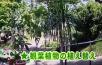 5月八十八夜を過ぎると観葉植物を西日の来ない屋外で育てると元気に育ちます。